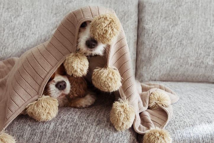 Stressprotocol deel 1 – Hoe herken je stress bij je hond?