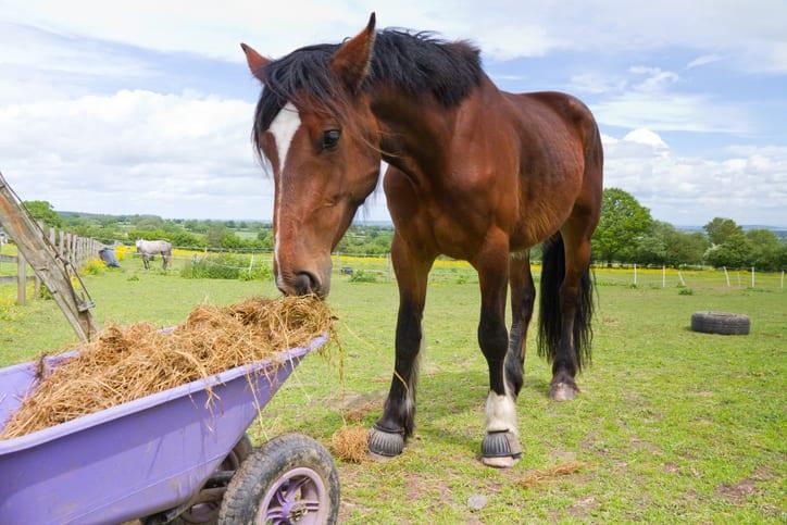 Hoe laat ik mijn paard aankomen?
