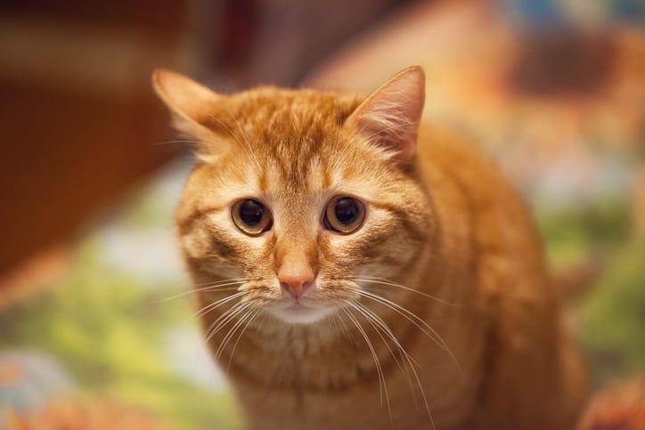 Praktische tips om stress bij je kat te verminderen