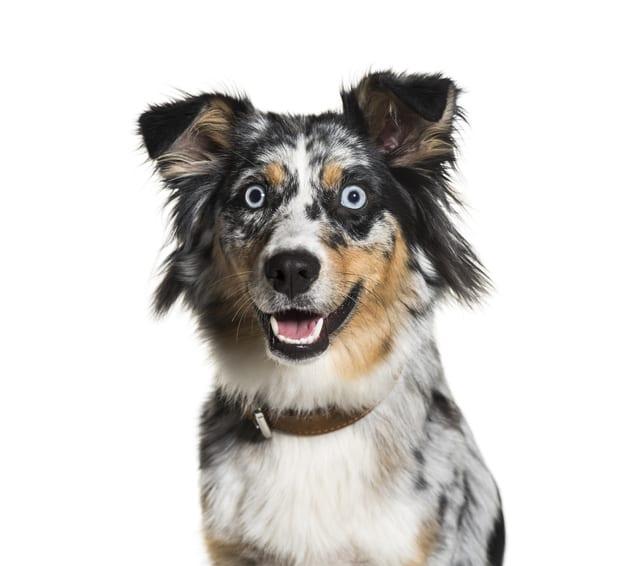 Stressprotocol deel 2: Hoe verminder ik stress bij mijn hond?