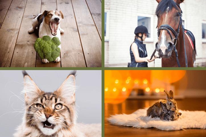 Best of blogs 2019