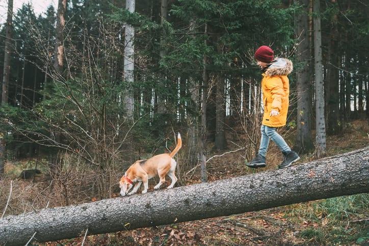 Zo zorg je voor een actieve en avontuurlijke wandeling met je hond
