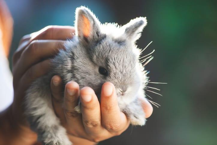 Wat is er mis met konijnenwelzijn?