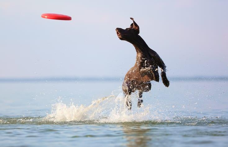 Voorkomen en herstellen: cold water tail bij honden