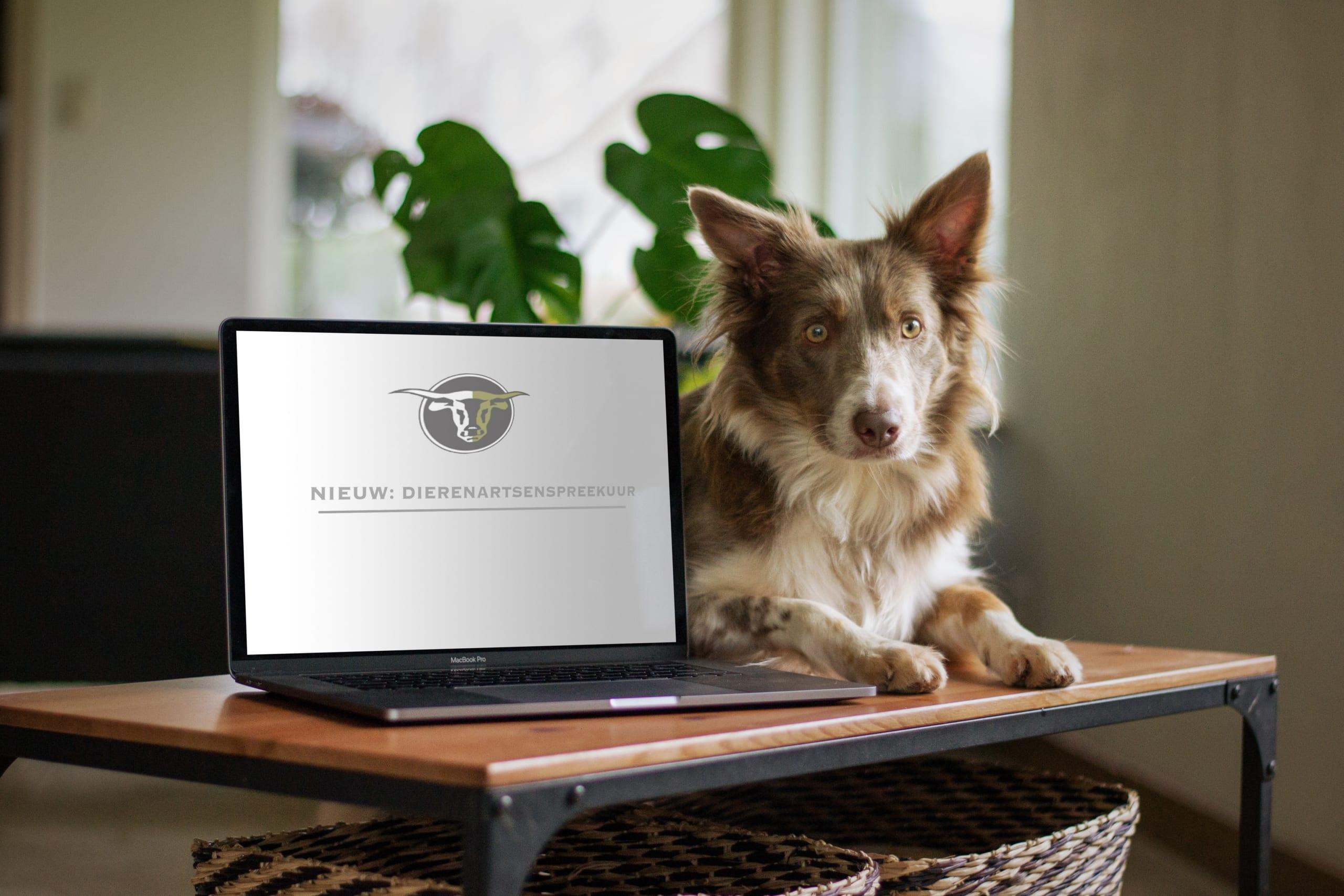 Bijzondere tijden vragen om bijzondere maatregelen… NIEUW: dierenartsenspreekuur!