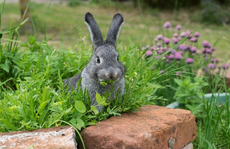 DIY kruidenbosje voor je konijn!