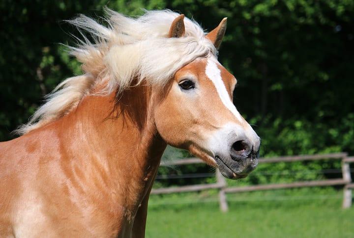 Tips van een paardenvoedingsdeskundige bij overgewicht van je paard