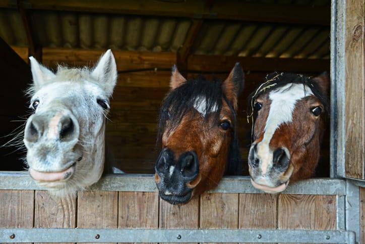 10 tips tegen stof en voor een gezond stalklimaat voor je paard