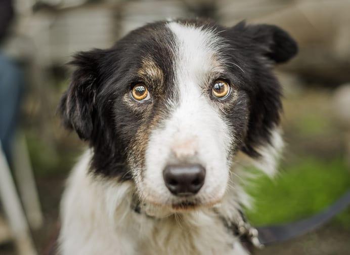 Hulpvraag van de maand: Help! Mijn hond is angstig voor van alles. Hebben jullie advies bij vuurwerkangst?