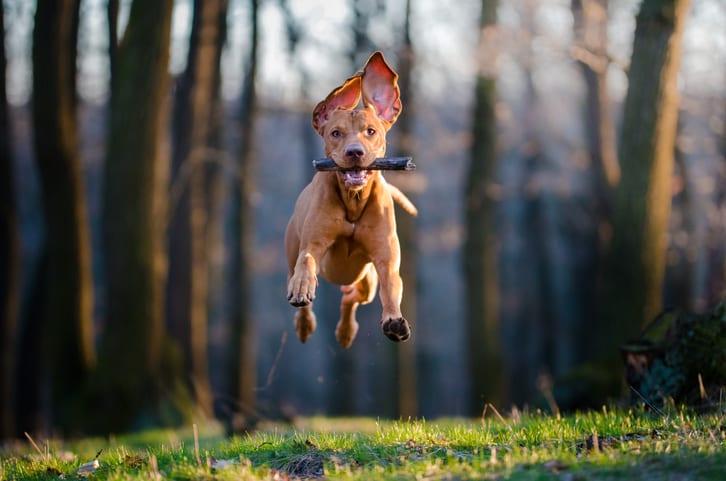 Hulpvraag van de maand: Mijn hond loopt kreupel. Kunnen jullie me helpen?