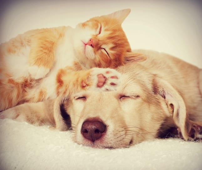 Deel 1 van een drieluik: de totstandkoming van een nieuw product voor honden en katten