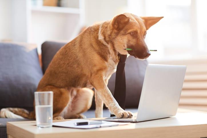 Wil je meer leren over het gebruik van probiotica bij je hond of kat?