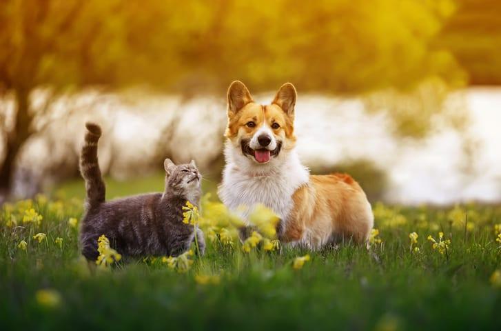 Wat is natuurlijke voeding voor honden en katten?