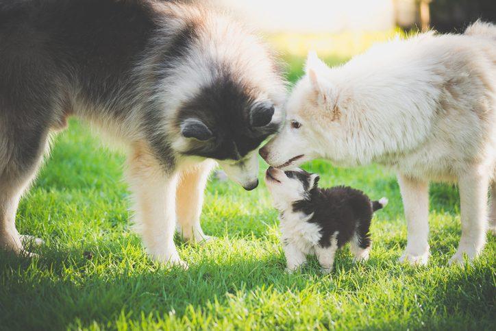 Wat moet je weten over loopsheid bij je hond